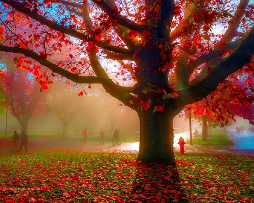 albero-1470309_701236983227430_537342327_n