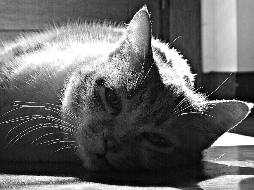 PicsArt_03-07-02.43.26